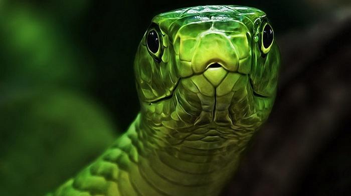 snake, reptile, animals