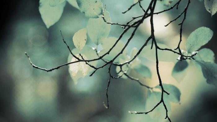 природа, глубина резкости, ветки, листья