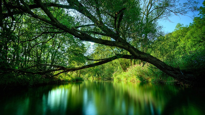 природа, лес, зеленый, деревья, пейзаж