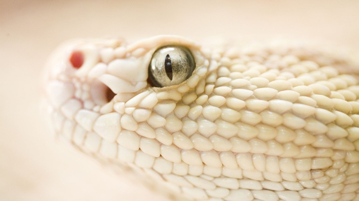 snake, depth of field, white, animals