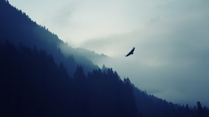 forest, birds, nature