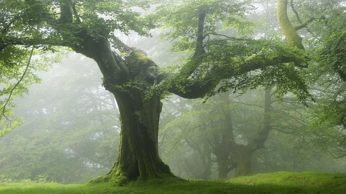 зеленый, деревья, природа, лес