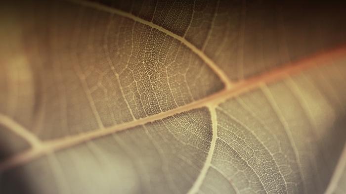 nature, macro, plants, leaves