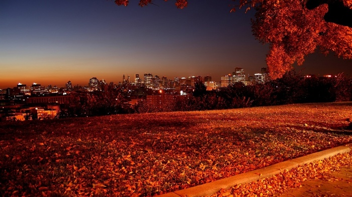 high-rise buildings, autumn, foliage, city