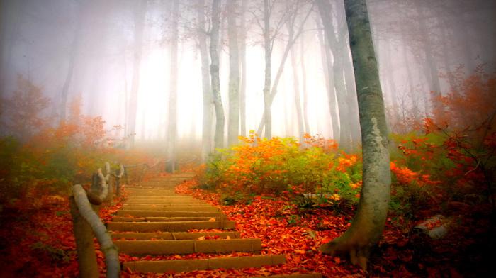 leaves, trees, mist, park, autumn