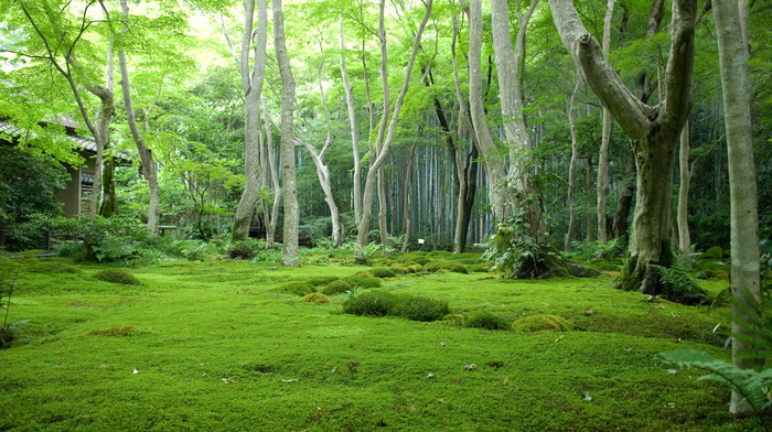 forest, trees, Japan, glade, nature