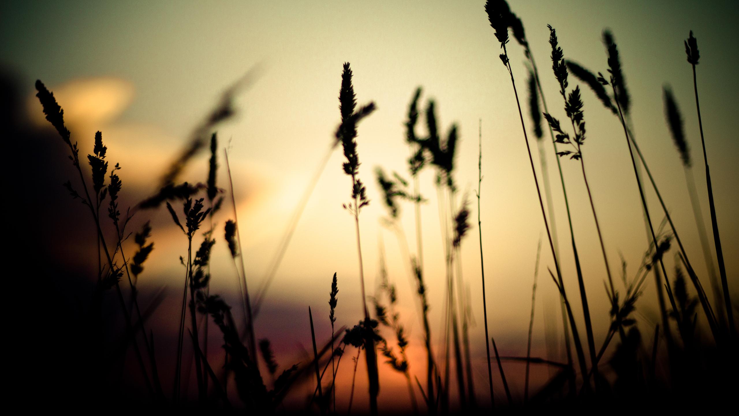 трава, закат, глубина резкости, природа