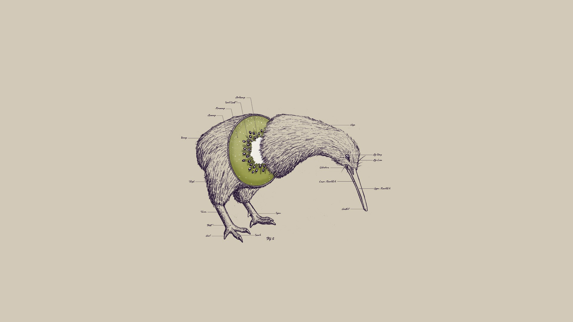 Animals Abstract Kiwi Fruit Birds Animal