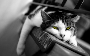 cat, selective coloring
