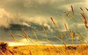 wheat, macro, field, depth of field, anime