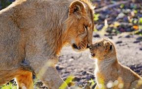 baby animals, lion, animals