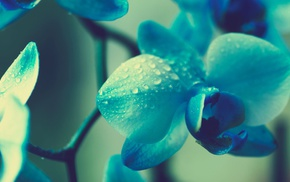 flowers, blue flowers, orchids, plants, macro, blue