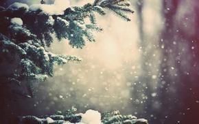 глубина резкости, снег, деревья, зима