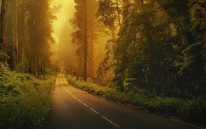 road, trees, nature, green, forest, landscape