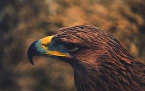 brown, hawks