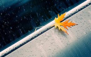 капли воды, вода на стекле, дождь, листья