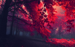 trees, mist, red, leaves, nature, fall