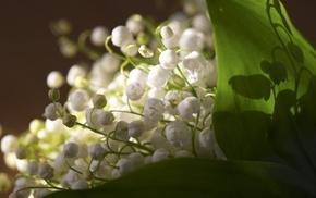 flowers, white flowers, spring
