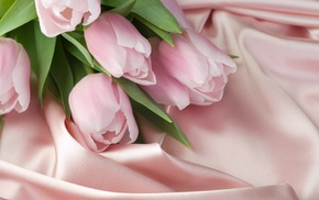 bouquet, flowers, tulips