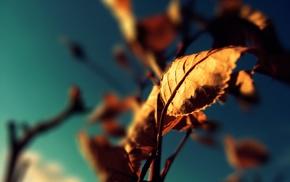 macro, leaves, depth of field