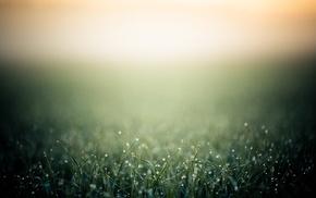 depth of field, grass, photo manipulation, bokeh