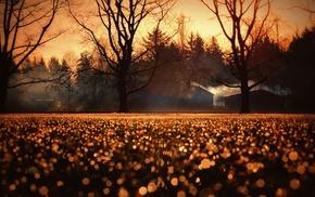 fall, sunlight, nature, landscape, trees
