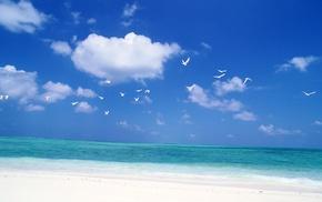 лазурный океан, чайки, побережье, природа, небо, птицы