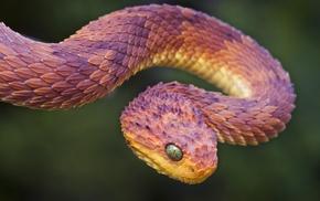 рептилия, змея, животные