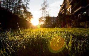 трава, фотография, солнечный свет, закат, природа