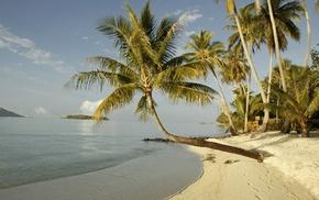 waves, summer, beach, palm, rest