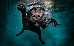 dog, underwater, animals, swimming