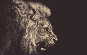 animals, sepia, yellow eyes, lion