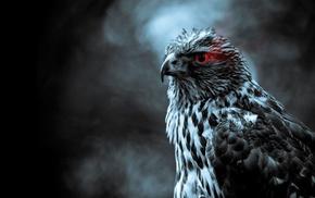 wings, animals, birds