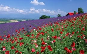 summer, color, grassland, poppies, lodge
