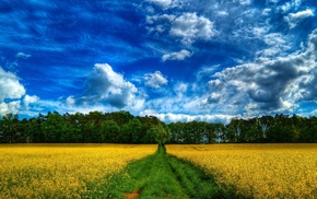 поле, лес, дорога, степь, лето