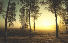 landscape, trees