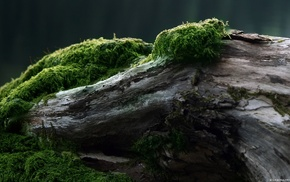 forest, nature, moss, wood, green, trees
