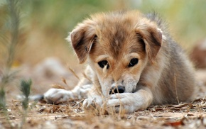 animals, puppy