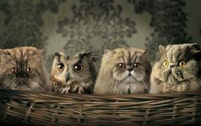 животные, юмор, кот, сова