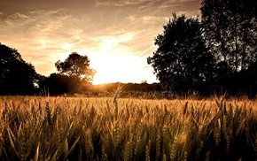 field, sunlight
