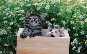 kittens, animals