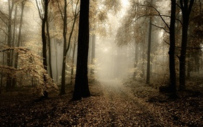 nature, mist, trees, path, HDR, leaves