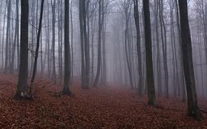 mist, leaves, nature, trees