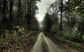 trees, dirt road, nature, path, HDR, forest