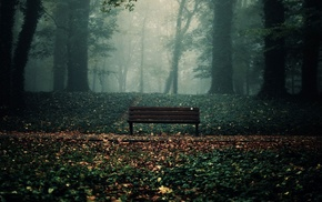 bench, leaves, trees, forest