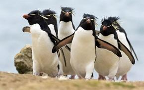 penguins, animals