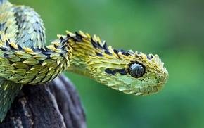 рептилия, змея, природа, животные