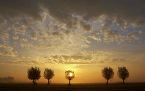 nature, sunlight
