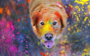 animals, Labrador Retriever, paint splatter, colorful, dog