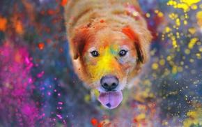 животные, брызги краска, красочно, собака